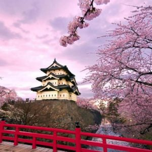 CHERRY BLOSSOMS GUIDE IN EXPLORING JAPAN THIS 2017