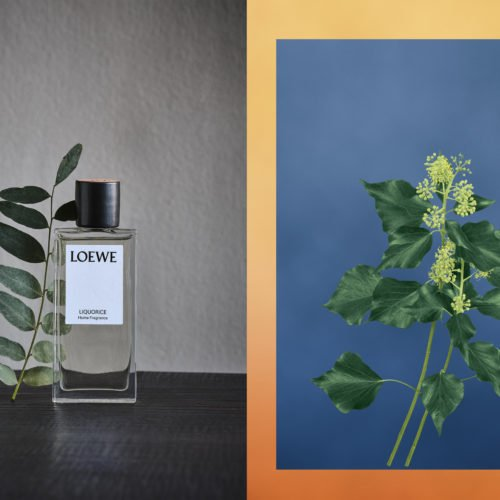 TREAT YOUR OLFACTORY WITH THESE NEW LOEWE PLANT-BASED HOME SCENTS